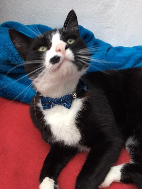thomas and his smart new dickie bow